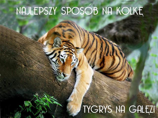 śpiacy tygrys