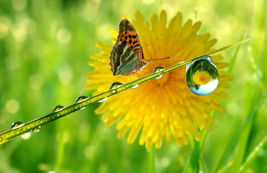 a-drop-a-reflection-of-the-butterfly-wallpapers