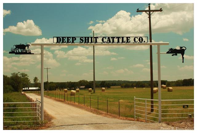 Deep Shit Cattle Company Pammy S World