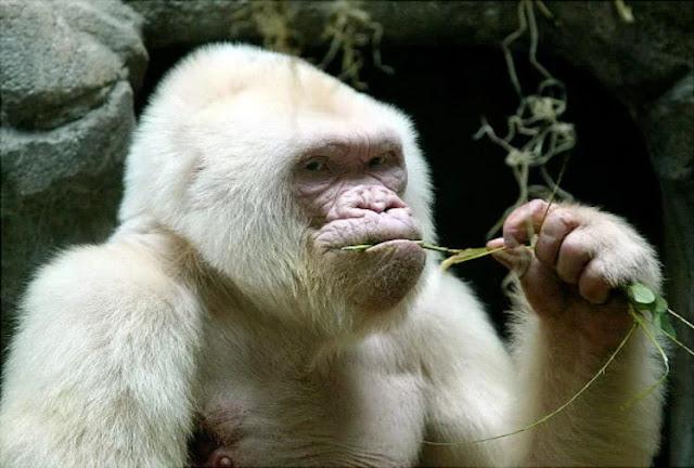 कभी नहीं देखा होगा ऐसा विचित्र जीव, आखिर तक वैज्ञानिक पड़े रहे सोच में कहां से आया है ये