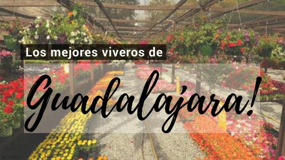 Listado de los Mejores Viveros de la Provincia de Guadalajara, España, donde puedes comprar plantas para tus proyectos