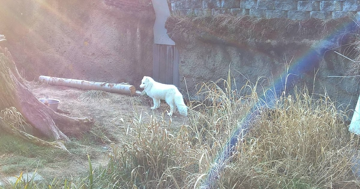 Point defiance zoo coupons