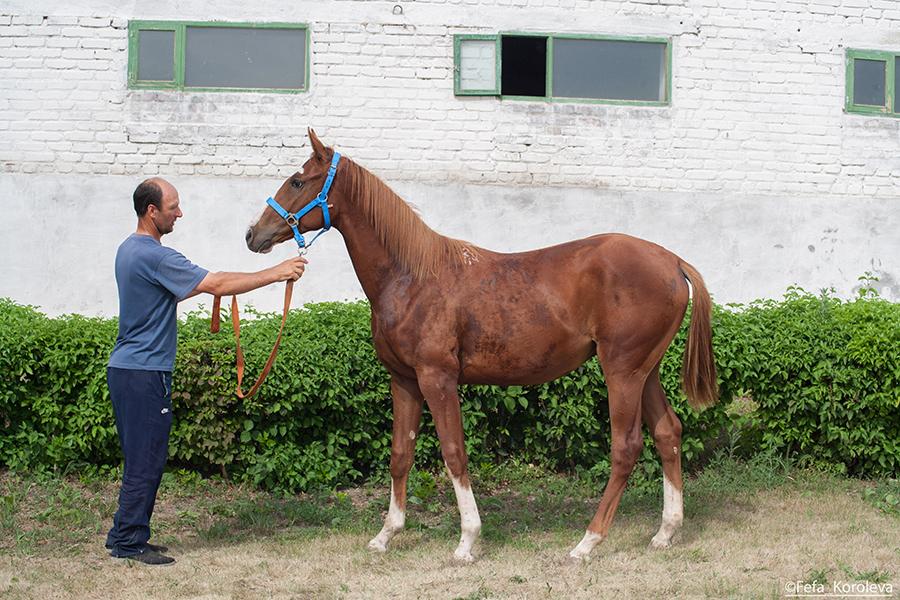 оптимизированные работать юловский конный завод фото ещё место
