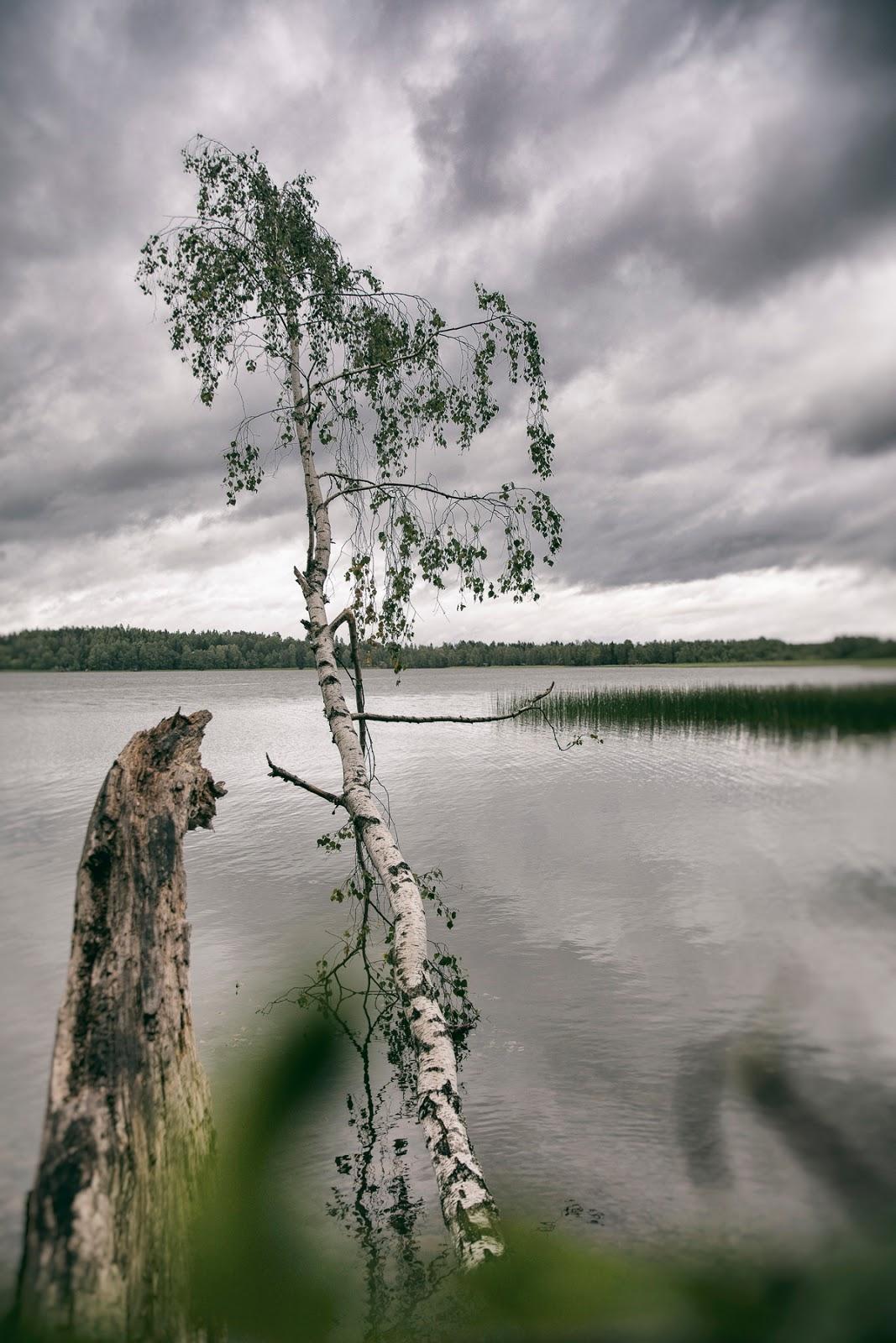 Juhannus, Visualaddict, valokuvaaja, Frida Steiner, Espoo, Oittaa, koivu, ranta, beach, tree, midsummer