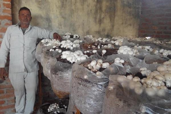 मशरूम की खेती बनी किसानों के लिए फायदे का सौदा