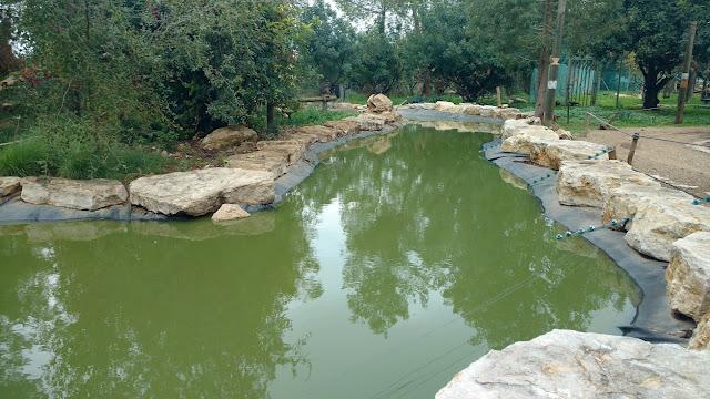 בריכות  מים במקלט הקופים הישראלי