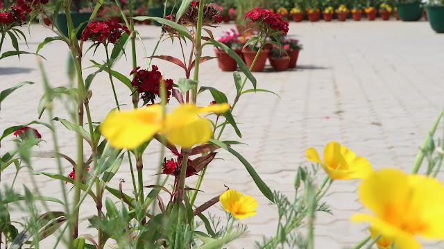 flowers-wallpaper-hd