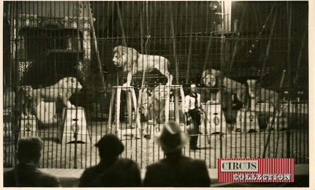 Spectacle Les lions présenté par Josefi Cirque Knie