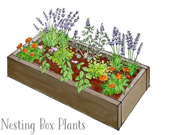 Plant a Nesting Box Herb Garden for your Chickens – Herb Garden Plants