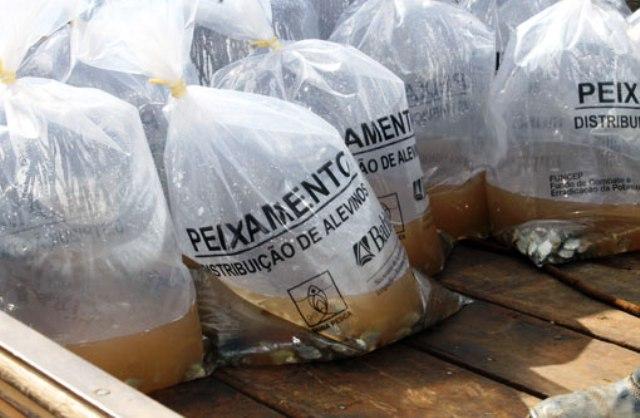Piscicultores de Itaetê recebem 60 mil filhotes de peixes
