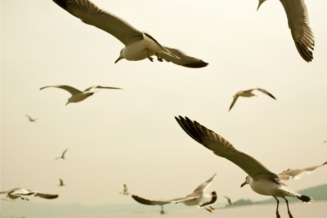 Si Camar Jonathan Livingston