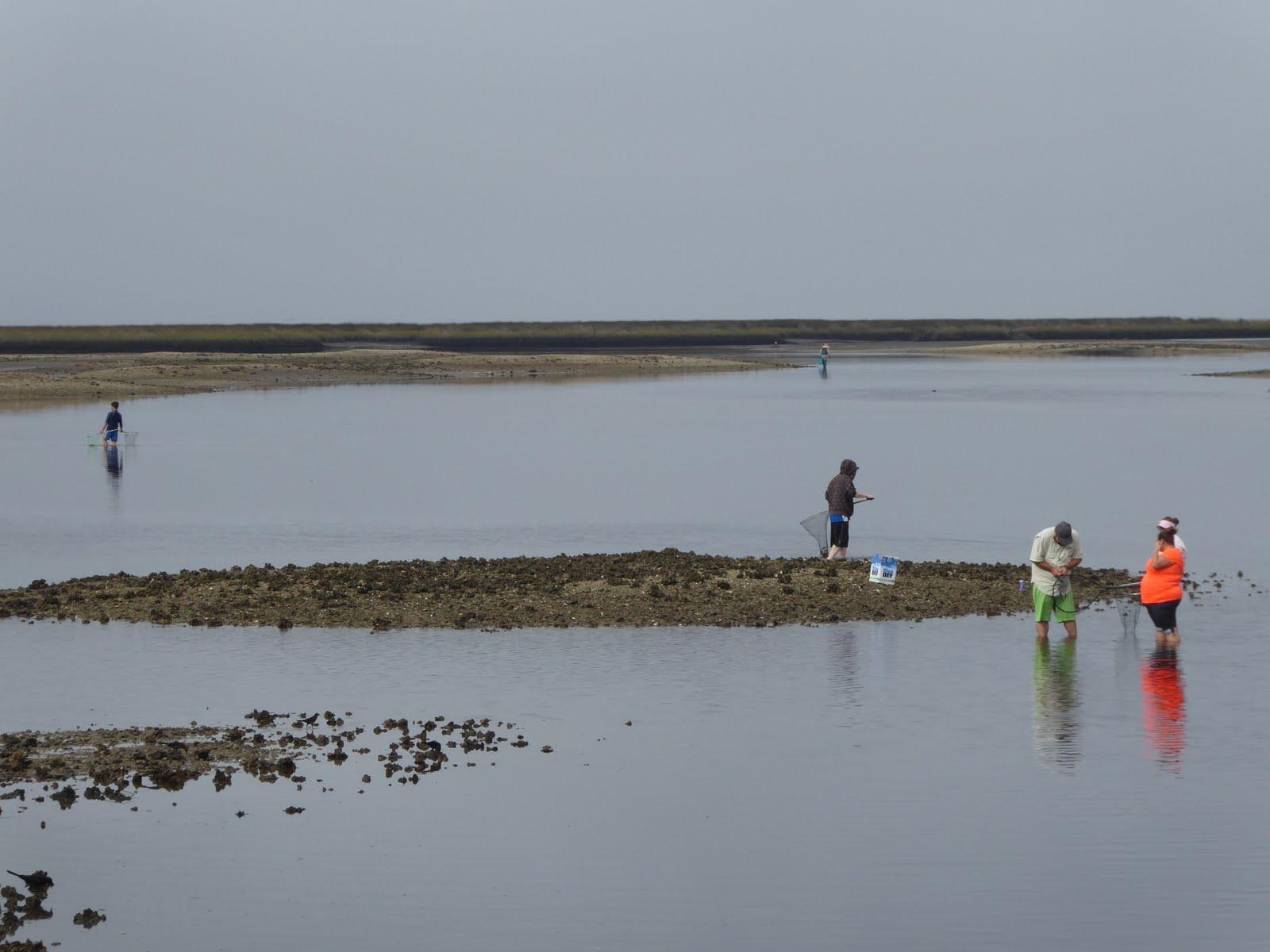 Horseshoe Beach Fl >> Retired Nomads Horseshoe Beach Fl Lower Suwannee National
