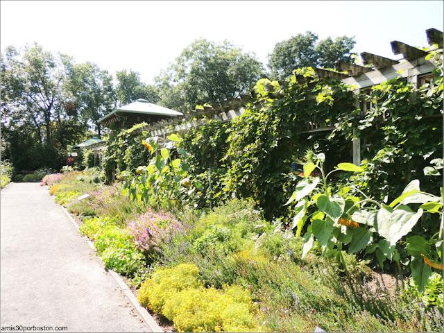 Garden of Innovations del Jardín Botánico de Montreal