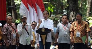 Harga Sawit Anjlok, Jokowi Sarankan Petani Tanam Jengkol, ini Alasannya