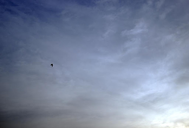 aerobatics, bandra east, bird, blue, clouds, evening, india, mumbai, sky, skywatch,