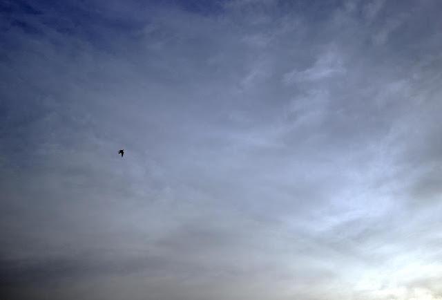 aerobatics, bandra east, bird, blue, clouds, evening, india, mumbai, sky, skywatch,