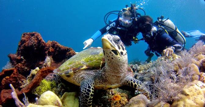 Fantastic Diving And Snorkeling In Bali