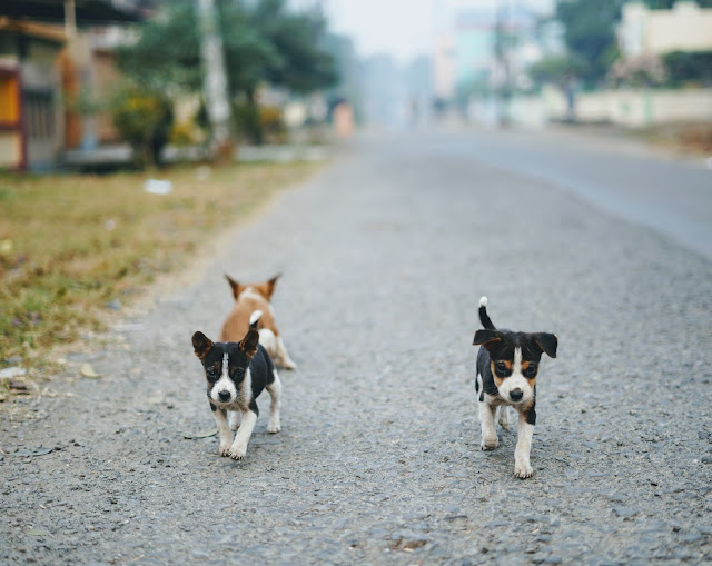 Puppies Clicked By Sourajit Saha 3