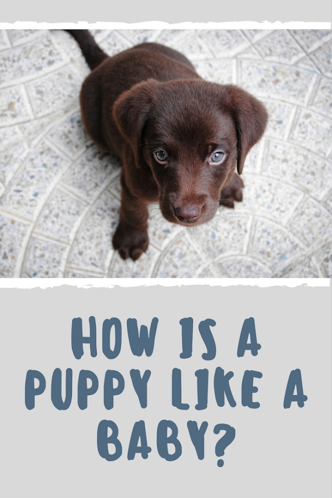How is a Puppy Like a Baby?