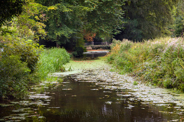 Summer scene along a river at Anglesey Abbey by Martyn Ferry Photography