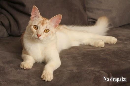 Preparaty witaminowo-mineralne dla kotów
