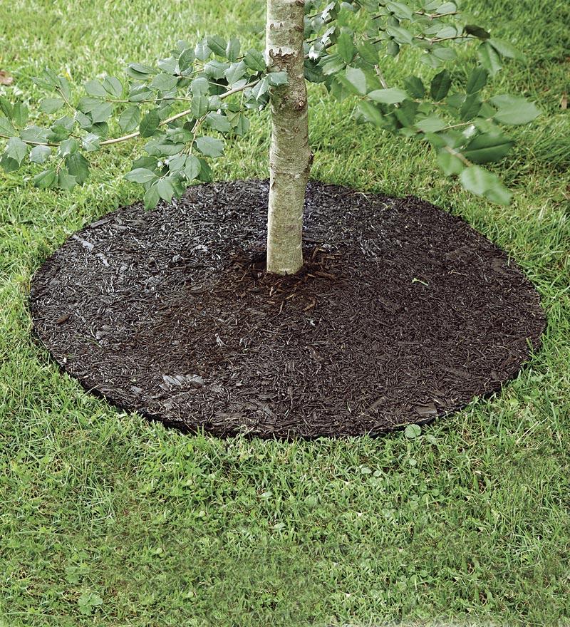 Borders Around Trees: Arbor Edge Plastic Round Tree Ring