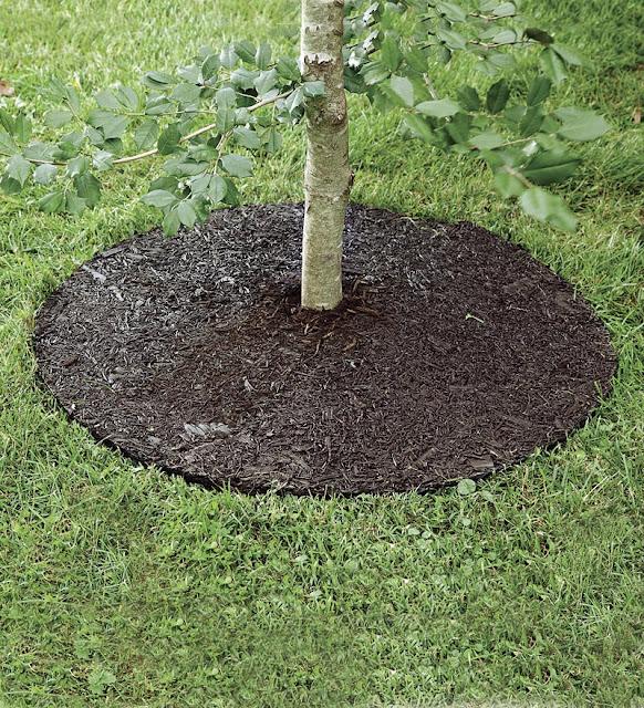 Circular Lawn Edging: Arbor Edge Plastic Round Tree Ring