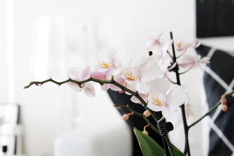 vaaleanpunainen orkidea valkoinen sisustus