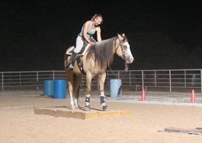 PSSM horse, n/P1, riding PSSM horse