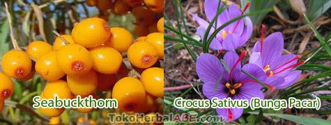 kandungan-bahan-novi-cc-cream-toko-herbal-abe
