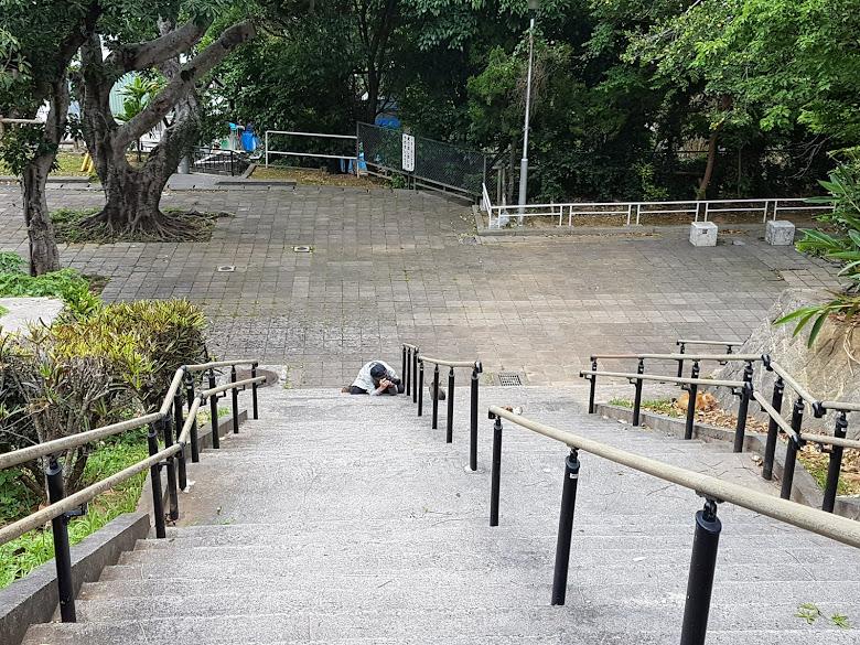 公園內景,攝影師趴在那裡拍貓呢