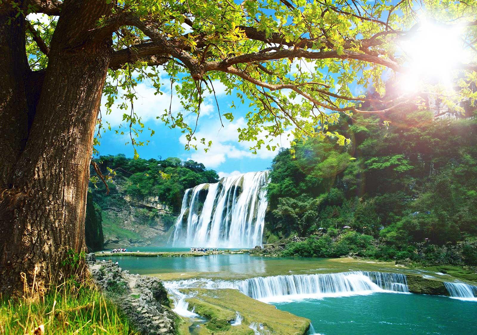 Tranh phong cảnh cây cổ thụ thác nước