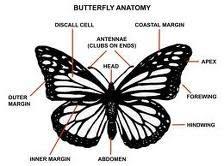 Invertebrate Diversity: Monarch Butterfly by Sarah Hurtado