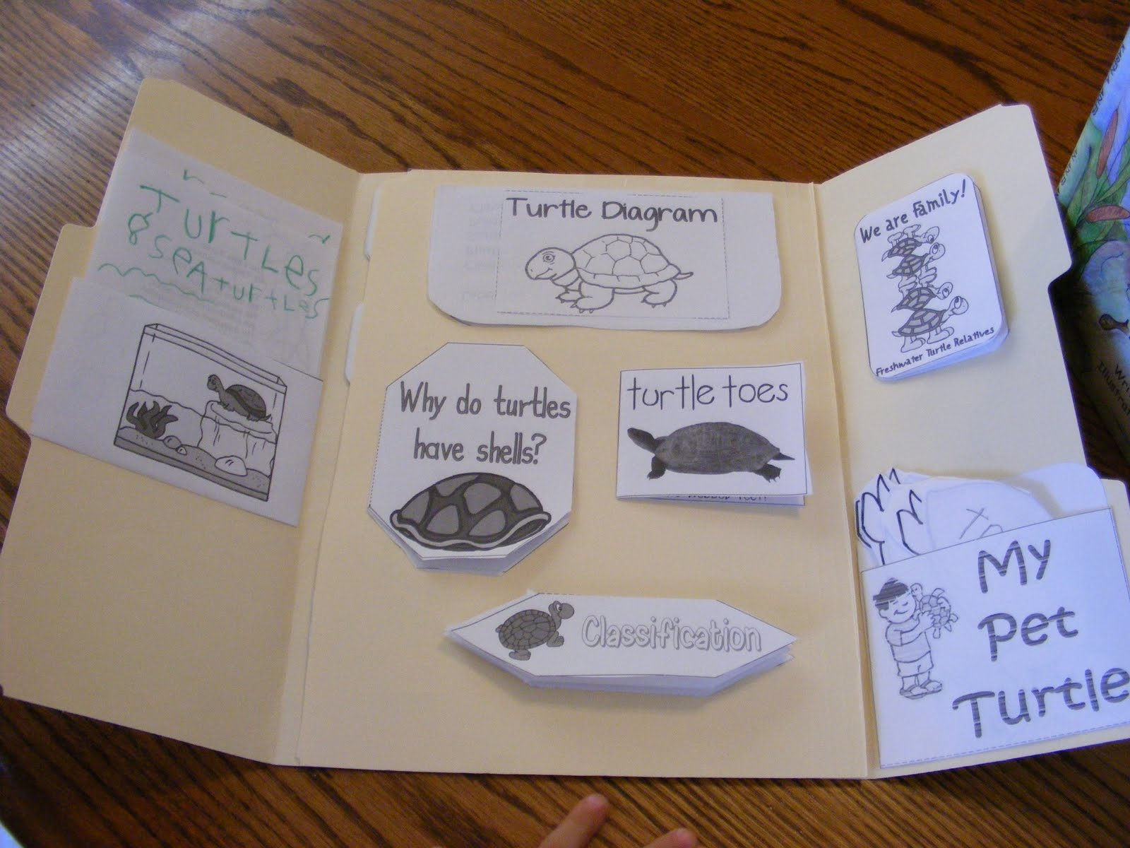 hight resolution of turtle lapbook