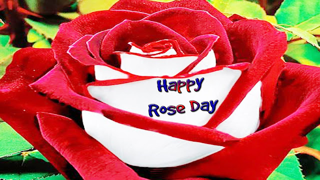 Titu-pitu-for-Rose-day-wallpaper