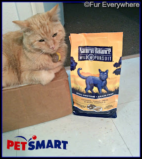 Carmine sits on one of his favorite boxes next to a bag of Natural Balance Wild Pursuit dry cat food.