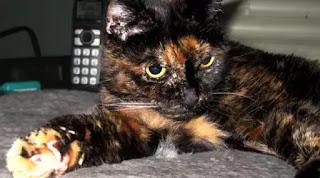 Kucing Paling Tua bernama Tiffany