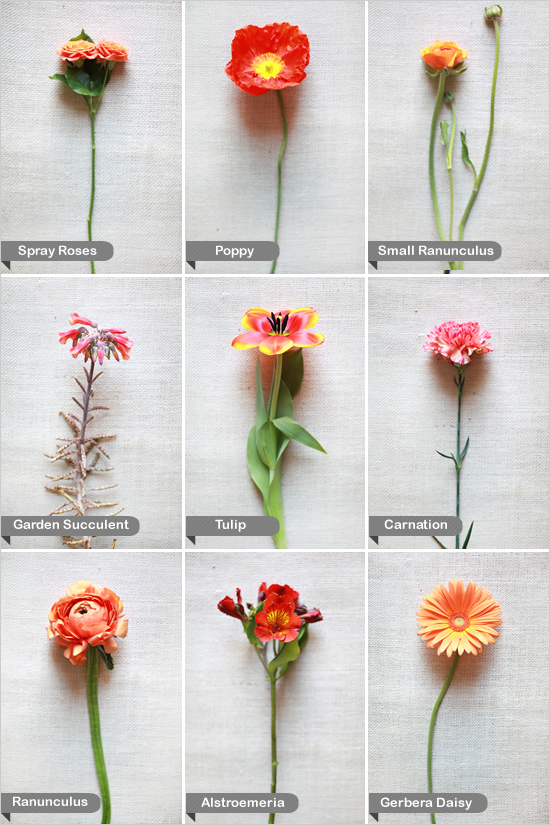 flower pictures and names