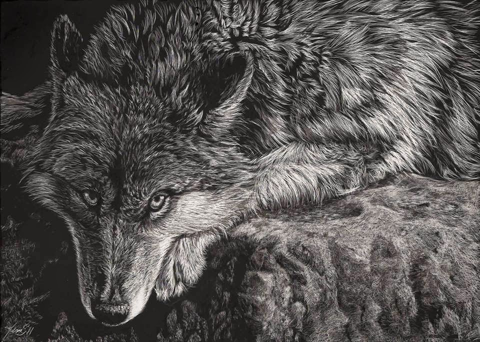 Simply Creative Scratchboard Animals Portraits By Allan