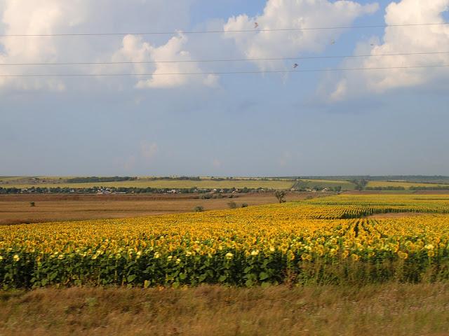 Mołdawskie pola
