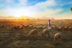 Kisah Inspirasi Kehidupan : Keadilan Allah SWT Kepada Pengembala