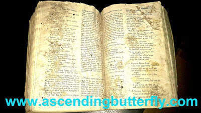 Bible, Battered Bible, Post Fire Bible