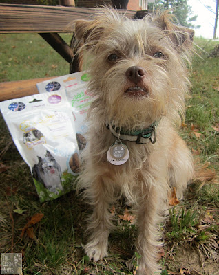 Bailey next to the three recipes of Paws Barkery Dog Treats