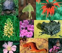 beranekaragamnya makhluk hidup di lingkungan Pengertian Keanekaragaman Hayati