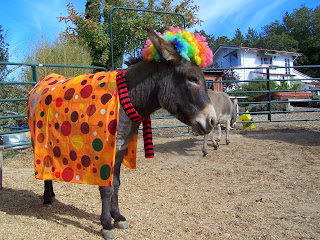 clown donkey