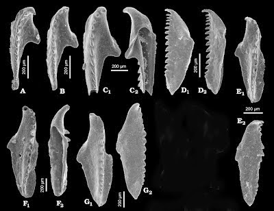 http://sciencythoughts.blogspot.co.uk/2013/07/two-new-species-of-scolecodont-from.html