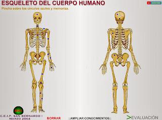http://www.gobiernodecanarias.org/educacion/3/WebC/eltanque/CM6/cuerpo/esqcuerpo.html