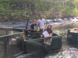 Three WCC members stand around a smolt trap, a device set up in the middle of a stream. They are each holding a clip board and smiling.