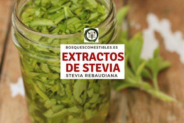La Stevia en Extracto es tan intensamente dulce, que se recomienda utilizar solo un pellizco.
