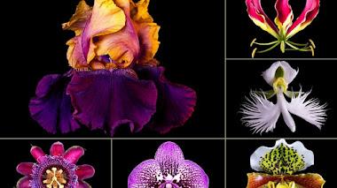 Naturalium: los hologramas reales de flores de Rob Munday